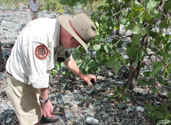 KNP Park Manager takes a closer look at the new natural recruits of the green plum plants from the seeds produced by the trees planted in 2009 on the trial landform.